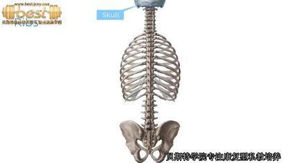 位置 肋骨 医師も推奨! 「肋骨締め」は見た目がよくなるうえ、ストレスや不眠を改善させる
