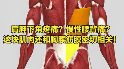 左 肩胛骨 下方 痛